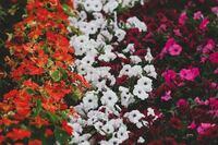 花の名前について質問です。写真が少し見にくいですが、3つの花それぞれなんという花でしょうか? 詳しい方よろしくお願いします。