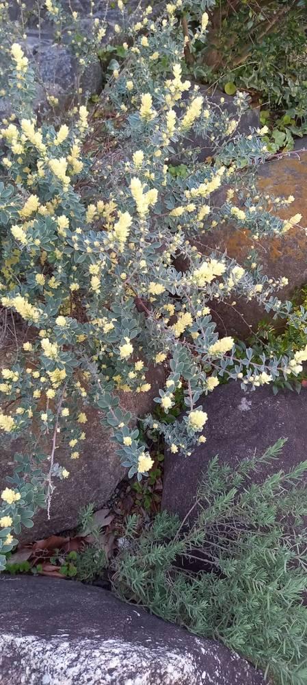 写真の植物の名前を知りたいです。ご教示下さい。