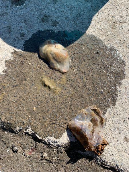 これ何かの卵ですか? 手前の袋に入ってました 海です