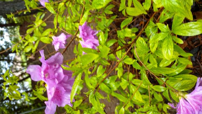 この花の名前、わかる方いますか?