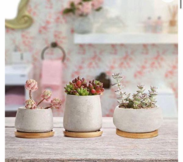 写真の多肉植物は造花でしょうか? もし本物なら3種類の名前を教えていただきたいです。