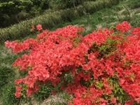 この花の名前を教えてください。 茨城県の筑波山中で今日撮影しました。