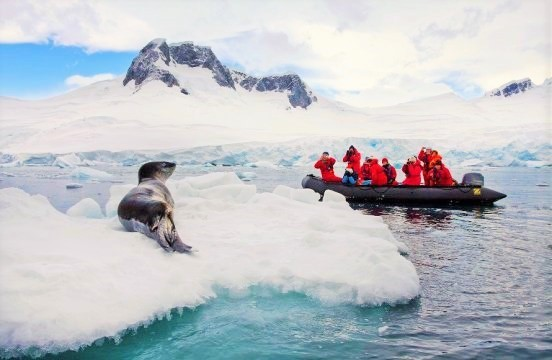 クリスマスは南極で過ごしたいですか??