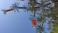 この赤い花はなんと言う木ですか。すみません、わかる方教えてください。きれいでした。名前が知りたいんです。 よろしくお願いいたします