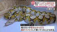 アミメニシキヘビは怒ると噛んだり巻き付いてくるそうですが  ヘビが怒る行為って、どんな行為ですか?