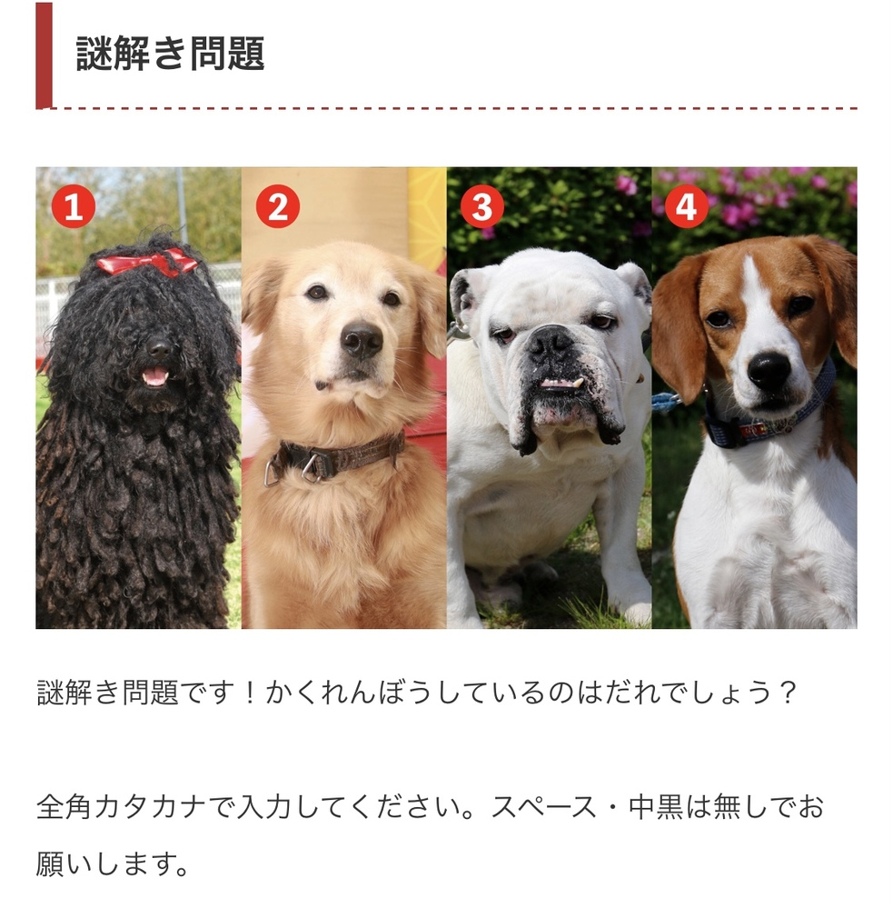 わんわん動物園のこのクイズ、一生正解になりません… 答えわかる方いますか?