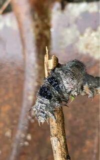 この虫の名前わかる人いますか?