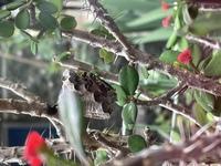 この蜂は何蜂ですか??植木鉢についてて。