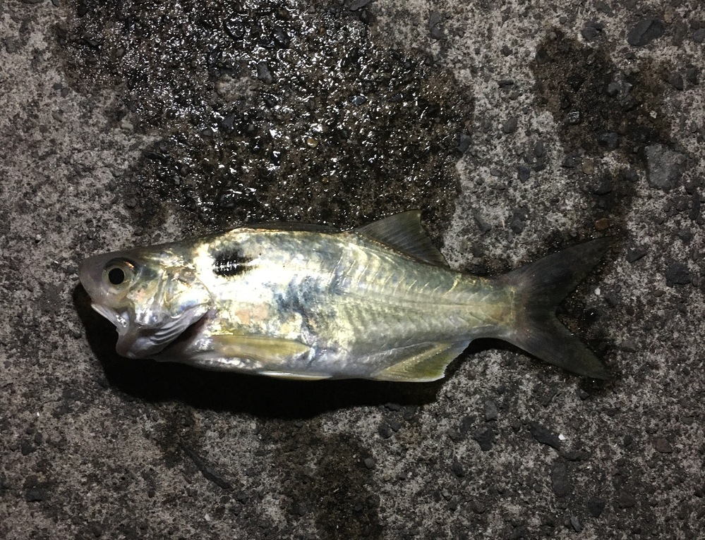 この魚は何という魚でしょうか?