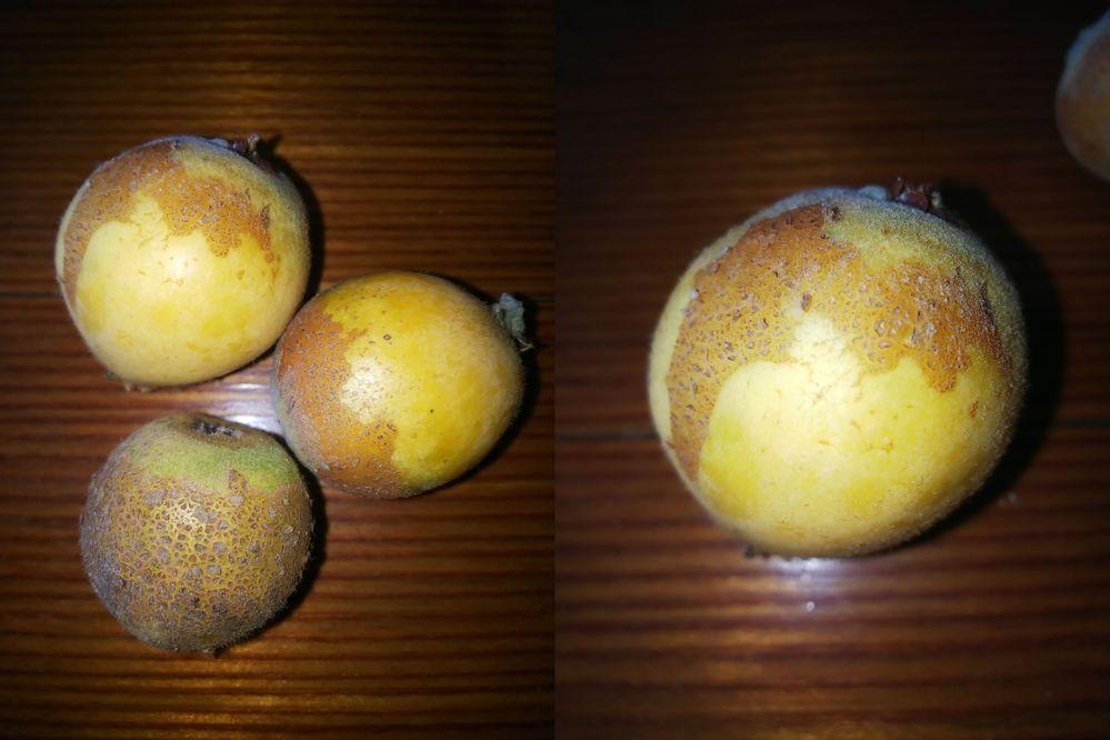自宅の庭でびわを育てておりますが、画像のように皮表面が梨の皮みたいになるものがあります。 調べてはみたのですが、日光によるものなのか、病気なのか、素人では判断がつきませんでした。 この症状についてご存知の方がいらっしゃいましたら、ご教示いただきたく存じます。
