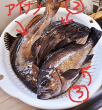 ②と③はなんという魚なんでしょうか?