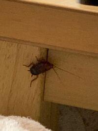 虫が入ってきたんですが、種類と対処法教えて欲しいです すみません。