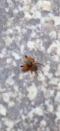 この小さい赤い虫分かる人いますか?昼に現れました。 体長は1ミリか2ミリぐらいです。
