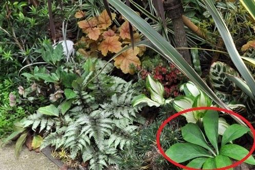 この植物の名前を教えてください! 右下の赤い丸でかこってある植物です
