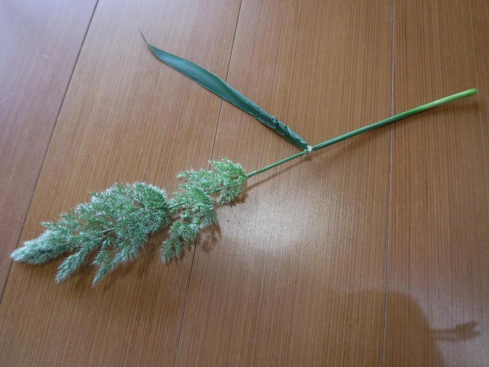 このほうきのような野草は何の草でしょうか? 調べようと思って携帯に入れていた画像なので、今の時季の植物ではありません。 いつ頃とったか分からなくなってしまいました。すみません。