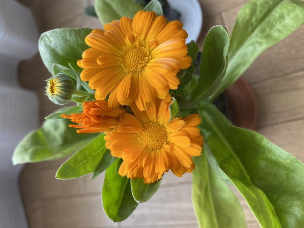 このお花の名前を教えてください。 よろしくお願いします。