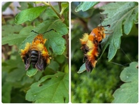 昆虫の名前を教えてください。 この子が花壇で休んでいました。