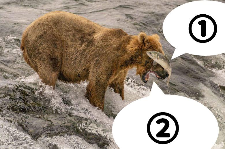 大喜利です。 熊とシャケは何と言っていますか? 例) ①食われるふりボディアターック! ②そんなん、おもろないから要らんねん!