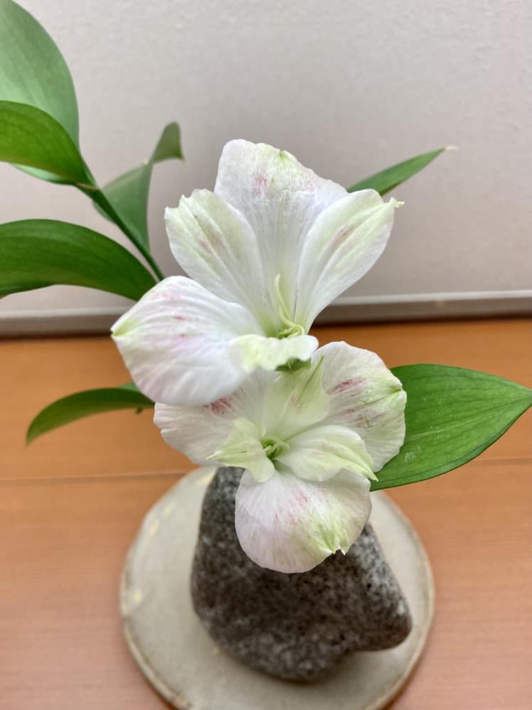 先週 旅館に飾られてた花です。葉っぱとつながってるかどうかは確認できませんでした。よろしくご教示ください。