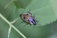この昆虫の名前を教えていただければ幸いです。よろしくお願いいたします。