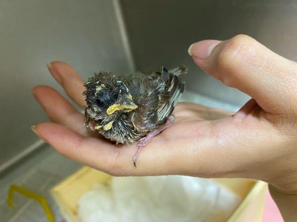 この鳥、なんの雛かわかりますか?
