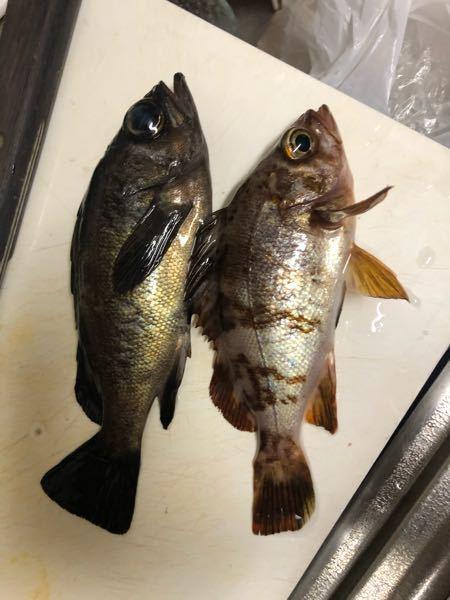 この魚はなんですか? 2つともお願いします。