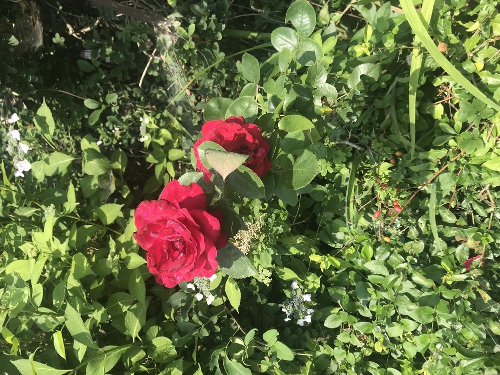 この花の名前は何ですか? 道端で綺麗だなぁと思い気になりました。