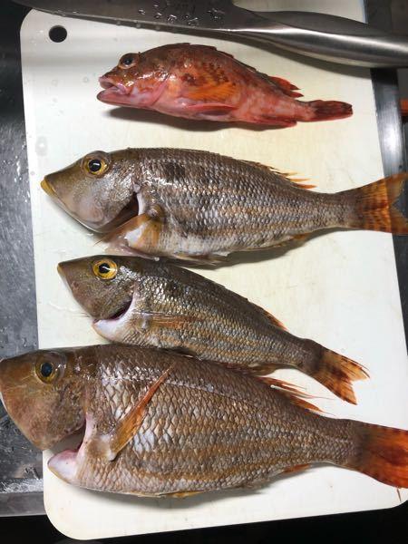 この魚の種類はなんですか?また、毒はないですか?食べられるでしょうか?