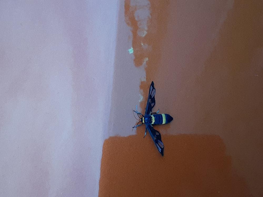 この虫の種類と名前を教えてもらいたいです。よろしくお願いします。