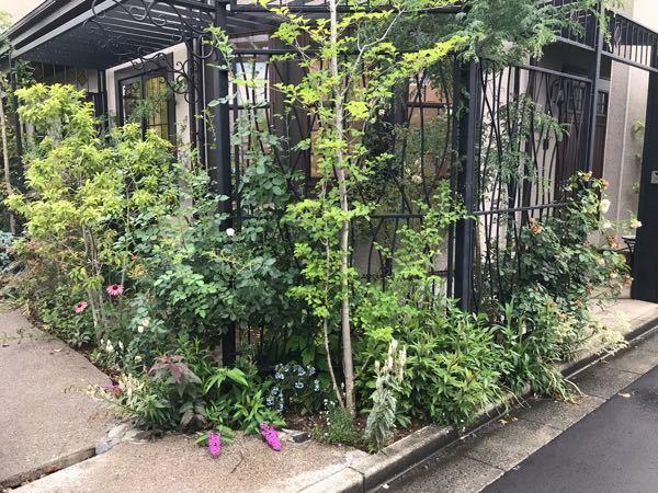 植栽の名前を教えてください。 庭の新規植栽を考えているのですが、アイアン越しにナチュラルで透け感のあるようなイメージにしたいと思っています。 写真のようなお庭があって、いいなあと思ったんですが花や木の名前がわかりません。 この写真に写っている植物の名前、分かるものだけで構わないので教えてもらえるとありがたいです。