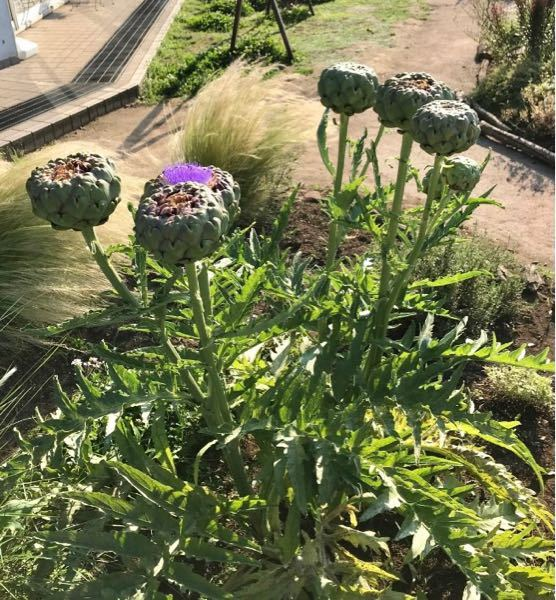 この花の名前を教えて下さい