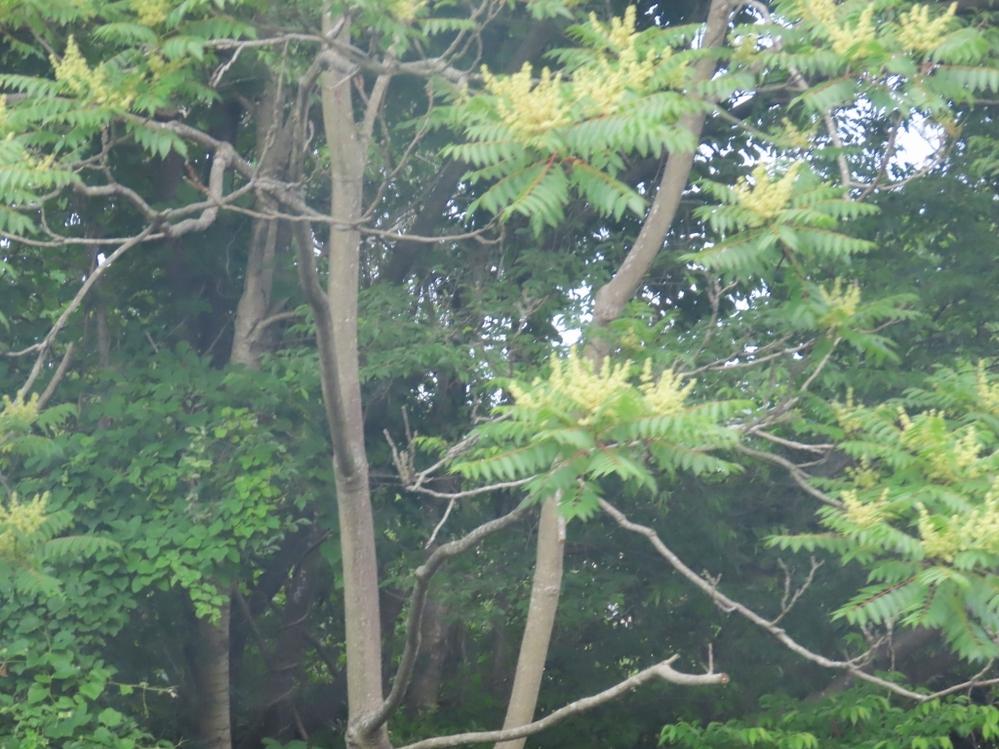 走行中に写真を撮ったのでブレブレですがこの写真でも分かるでしょうか? 毎年この時期に咲く樹木です。 ナンと言う木でしょうか?