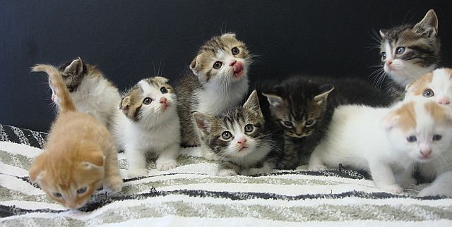 こんばんは 皆さんは 仔猫がたくさん出てくる夢を 見たことはありますか?? この夢は 人間関係や恋愛運の上昇を意味しており 女性がこの夢を見たら 今後妊娠する可能性のある 夢でもあるらしいです!!