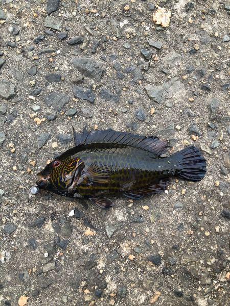 この魚なんですか?