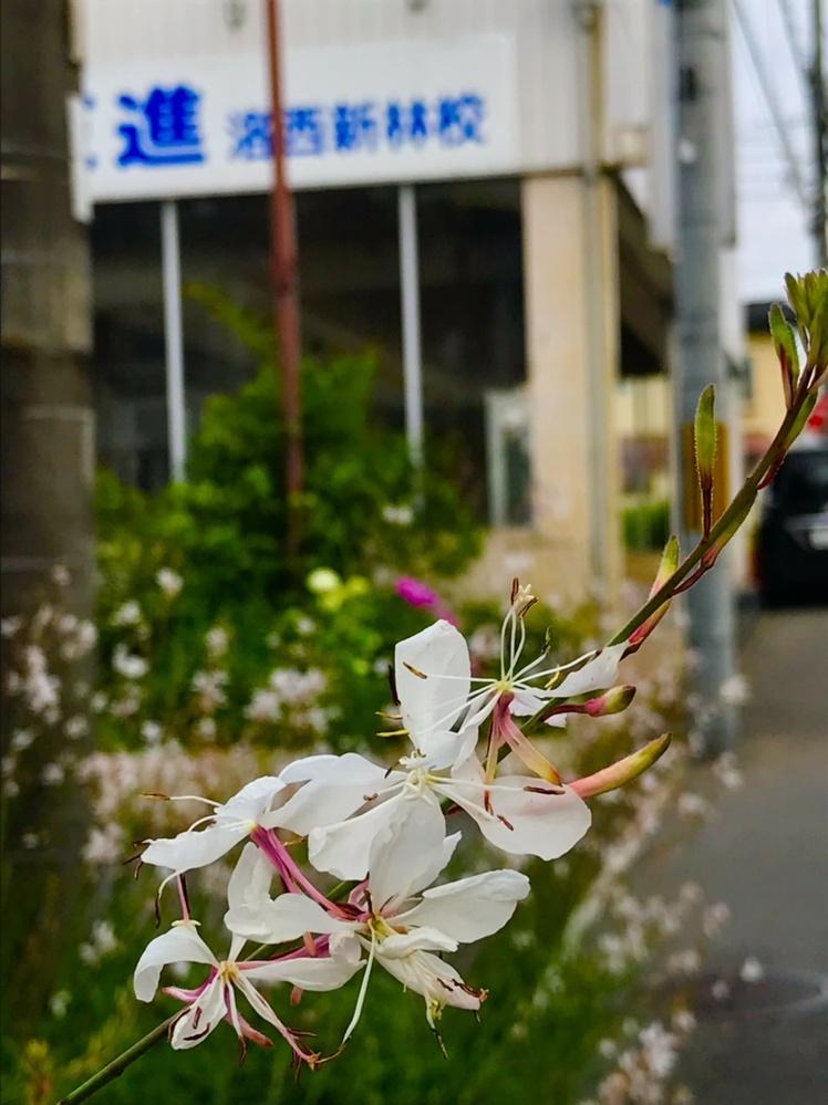 この花は何でしょうか? ドウダンツツジではないですよね。 教えてください‼︎