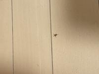 この蜘蛛は毒ありますかね?