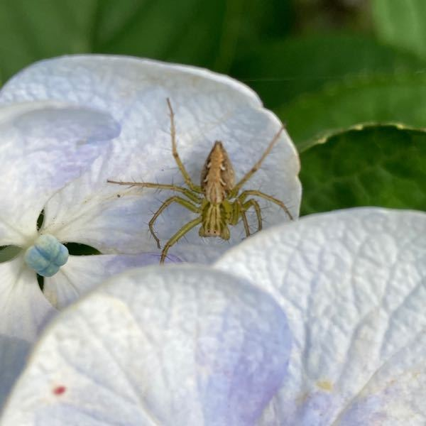 クモの種類わかりますか?