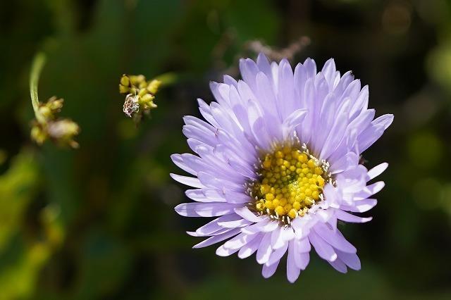 磐梯山で見つけた花です。 名前を教えて下さい。 宜しくお願いします。