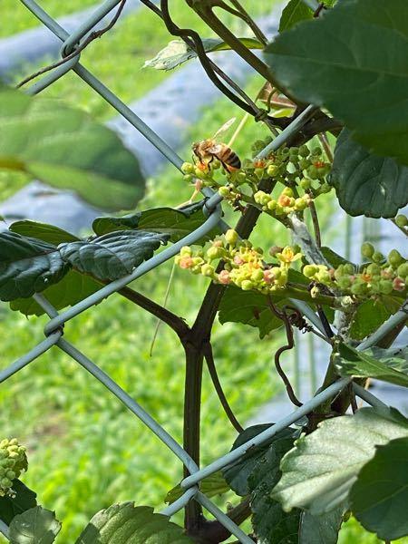 このハチちゃんはなんていう名前ですか??? 撮影場所は鹿児島、日時は6/14です。