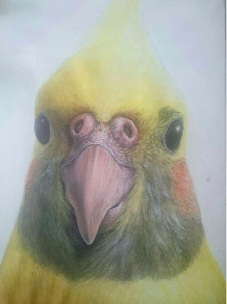 こういう鳥の毛の感じってどうやったらアクリル絵の具で表現出来ますかね?