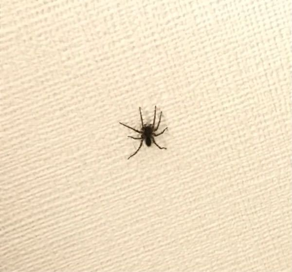 この蜘蛛はなんという名前の蜘蛛ですか?