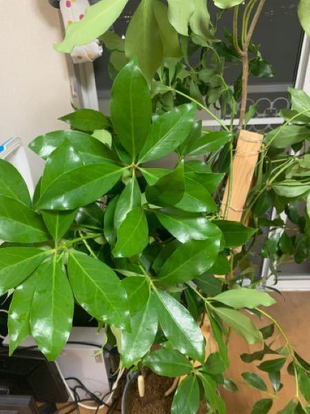 お疲れ様です 植物の名前について質問です この植物の名前を教えて下さい