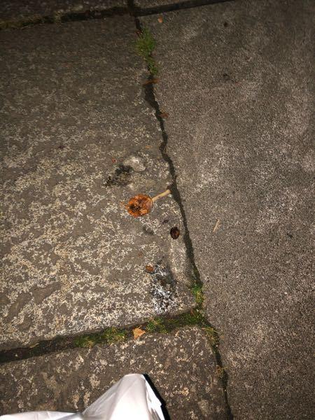 これは何の実か分かりますか? 夜中に歩いていたら頭上に落ちて来て発狂してしまいました… 近くに2,3m程度の木があったので、熟して落ちて来たんだと思うのですが、この正体は何なのでしょうか?(実は3cmくらいだったと思います)