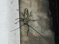 マンションのベランダで発見したのですが、こちらの昆虫の名前が分かる方おられましたら教えていただきたいです。 また、動く気配がないのですが、どうすればいいですか?