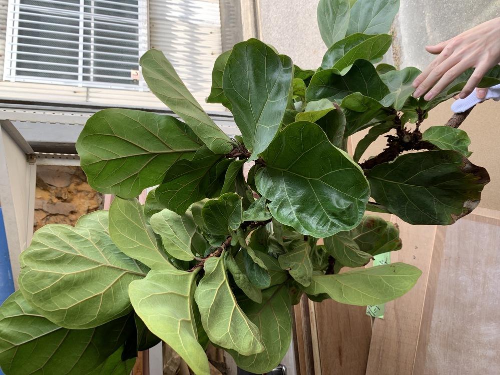 この2つの植物はなんていう植物でしょうか? お客様から処分してほしいと頼まれたのですが、根がついているので、植えようかとも思っています。 また、土はどんなものが良いですか? お願いしますm(_ _)m