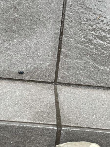 この虫なにかわかる方いますか? 玄関を開けると必ずいて気持ち悪いです。 対処法教えてください