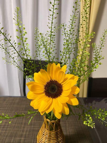 妻が買ってきた花の中にナズナのようなものがありました。ナズナでしょうか?カメリナ?