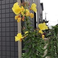 花の名前を教えてください。