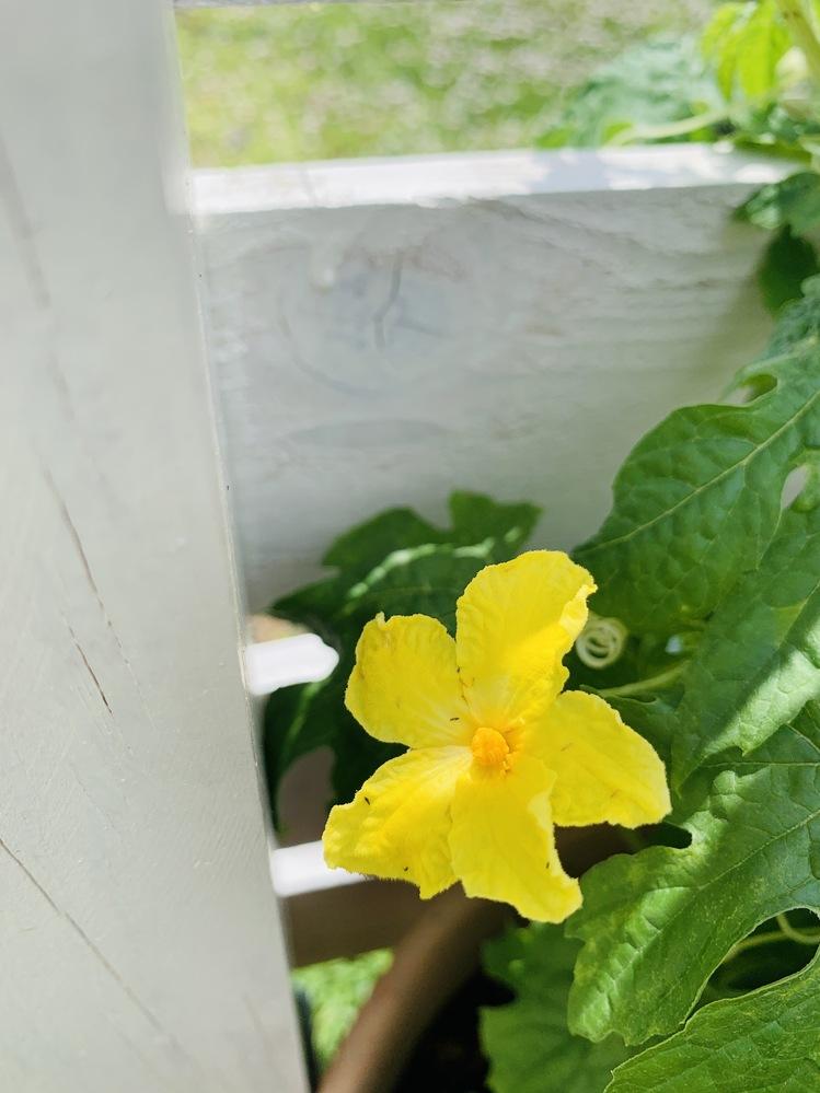 ゴーヤやカレンデュラ、マロウの花の中に小さな虫がいるのですが、名前と原因、出来れば有機栽培基準での対策を教えて頂きたいです。