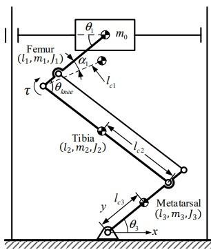 角速度の求め方について質問です。 下の画像のロボットについて、回転する膝関節θkneeの部分の角速度が ω=2v/{(l1+l2+l3)cos(θknee/2)} と表されるらしいのですがなぜこのように表されるのかがわからないので解説していただきたいです。 v:ロボット本体の垂直方向の速度 l1:Femur部分の長さ l2:Tibia部分の長さ l3:Metatarsal部分の長さ θknee:膝関節角度